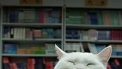 一碰书我就瞌睡